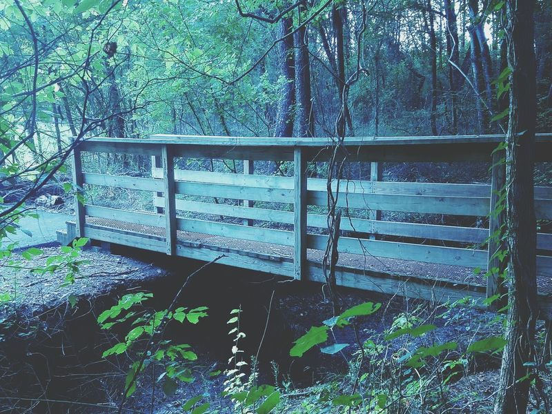 Bridge Evening Dark Dusk Environment Leaves Nature Foliage Wooden Bridge Walking Bridge Beauty In Nature Landscape Colour Of Life Colors Tennessee Woods Trail Hiking Trees Fairy Forest Magical Forest Magical Trees Forest