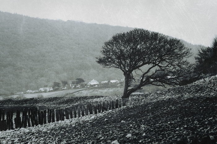 Monochrome Porlock Weir Somerset Aged Beach Beauty In Nature Day Environment Land Landscape Nature No People Outdoors Plant Rural Scene Scenics - Nature Sky Tranquil Scene Tranquility Tree