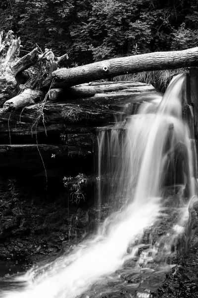 Waterfall Water Nature Waterfall Tree River Scenics No People Forest Outdoors Beauty In Nature Day Nature Tree HDR Canon70d Plant Canonphotography Fineart_photo Blackandwhite Monochrome Waterfalls EyeEm Selects