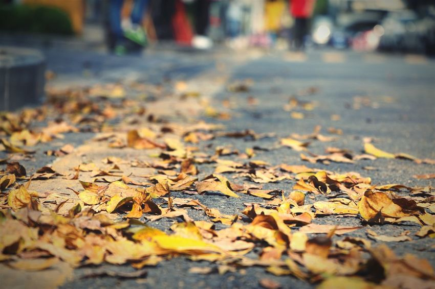 🍂🍂🍂 Leaf Autumn Dry Season  Change Surface Level Street Leaves Road Selective Focus Close-up Fragility Fallen Natural Condition Abundance Large Group Of Objects Fallen Leaf Day Scenics Nature