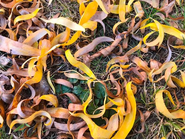 Autumn Colors Change Environment Natural Texture Large Group Of Objects Backgrounds Natural Pattern Background Fall Floortraits Autum Texture Autumn Leaves Autumn Nature Pattern Patterns In Nature Texture_collection Organic Textures Textures In Nature Textures And Patterns Textures And Surfaces Textured  Willow Leaves Willows Willow