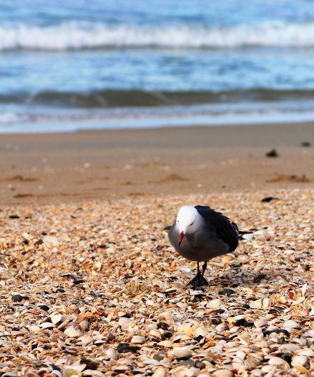 Seagull perching at beach