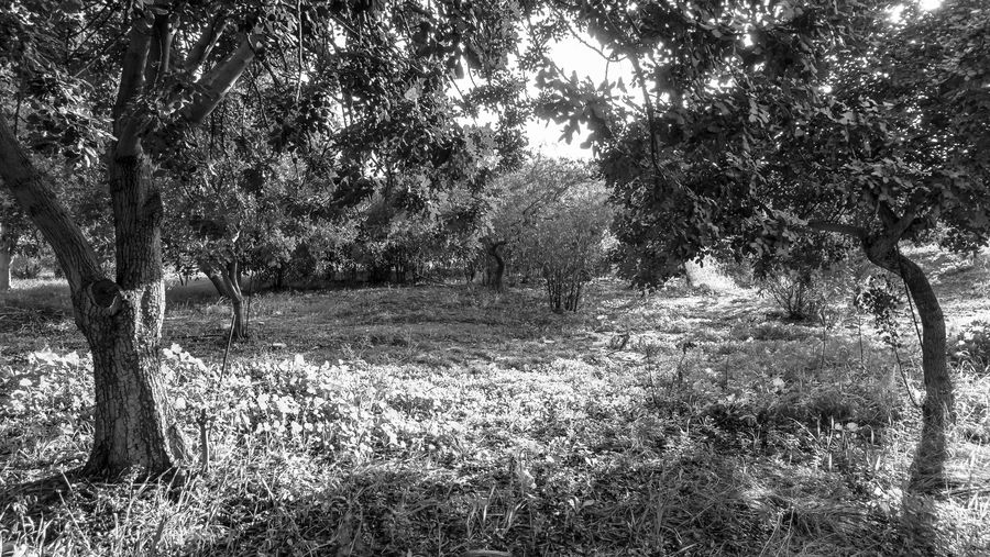 Tree Plant Growth Land Tranquility Nature Beauty In Nature Day Tranquil Scene No People Field Landscape Grass Outdoors Environment Trunk Tree Trunk Scenics - Nature Forest Non-urban Scene Blackandwhite Black And White EyeEm Best Shots EyeEm