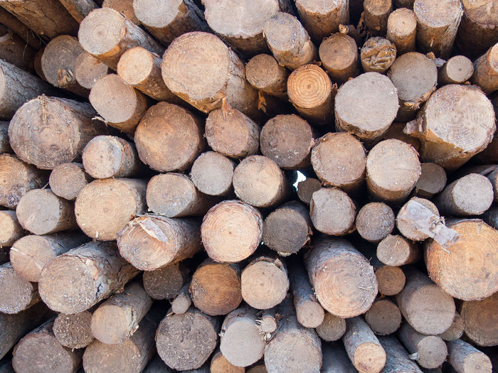 Wood Timber Logs Logs Pile Log Tree Trees Stack Stacked Pile Piled Up Round