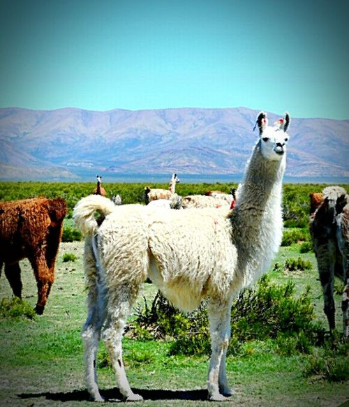 Que lindo Jujuy!?? Hello World Fir Llama Norte Relaxing Beautiful Cheese! Pic Gif Like