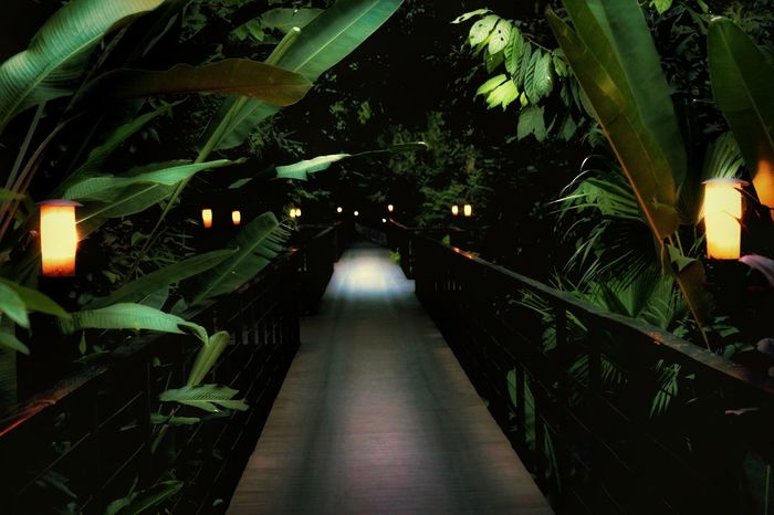Illuminated Night No People Path Pathway Path Trail Mystery Illuminatedpath Resort Rainforest Flora And Fauna Walkway Vanishingpoint Leadinglines Deck Decking Theroadlesstraveled Ecology Green Dark Dusk Footpath