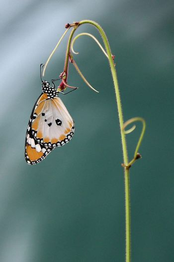 Butterfly perching on a branch