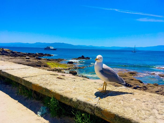 Bird Sea Animal Themes Animals In The Wild Water One Animal Perching Animal Wildlife Seagull Nature Day Rock - Object Blue Horizon Over Water No People Outdoors Beauty In Nature Sea Bird Beach Sky