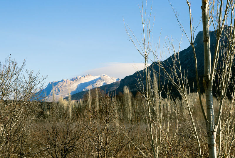 Snow Tops Aladağlar Beauty In Nature Clear Sky Day Forest Landscape Mountain Mountains Mountains And Sky Nature Niğde Outdoors Scenics Sky Sunlight Tree Trees Trees And Sky Turkey Türkiye
