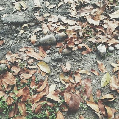 Satu satu daun berguguran. Jatuh ke bumi dimakan usia. Tak terdengar tangis tak terdengar tawa. Redalah reda - Tunas Muda by Iwan Fals