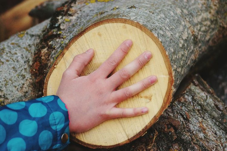 Cropped hand of woman touching log