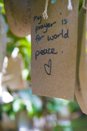 Hope Nature Peace Tree Wishes World Peace Hanging Message Outdoors Wish Wish Tree