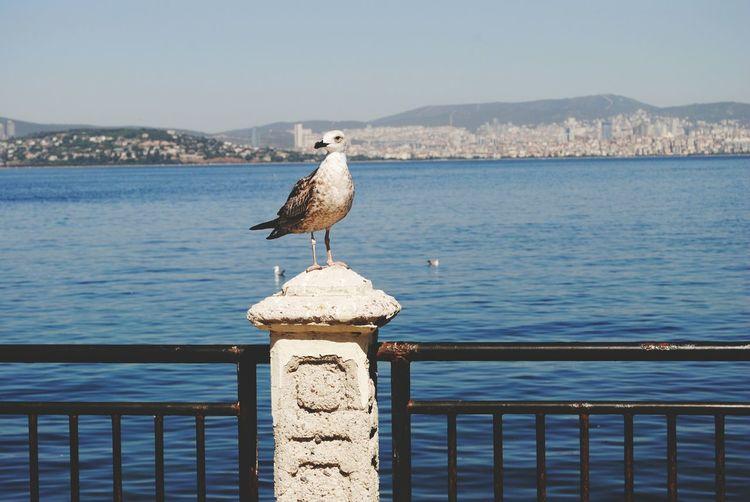 Turkey Princess Island Seagulls And Sea Seagull Alive  Seaside Summer Views Travelphotography Walking Around Sea And Sky