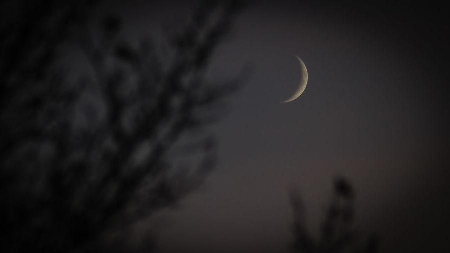 Sichelmond Mond