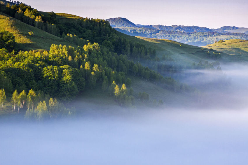foggy morning in Apuseni Mountains Light Beauty In Nature Day Landscape Mist Mountain Nature No People Outdoors Scenics Sky Sunrise Tranquil Scene Tranquility Tree
