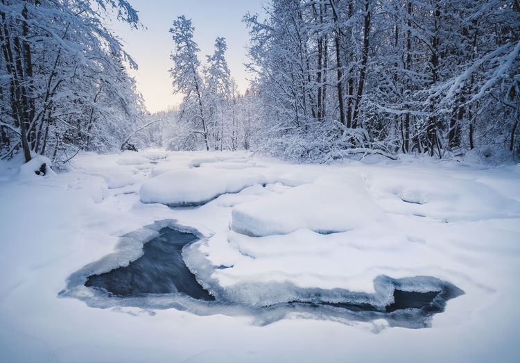 Scenic winter landscape with flowing river and morning light in Finland Snow Cold Temperature Winter Tree Nature Beauty In Nature White Color Scenics - Nature Tranquility Tranquil Scene Powder Snow Non-urban Scene Bare Tree Frozen No People Morning Light Finland River Flowing Water Landscape White Background Blue Water Nature Atmospheric Mood