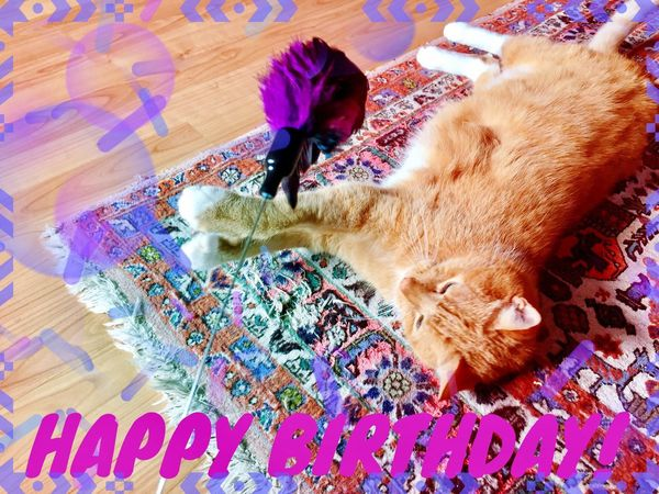 Cat Lovers 🐱💞 Art, Drawing, Creativity Cat Love ♥ Cat Of EyeEm Pets Creativity Creative My Friend ❤ Cat Collection Cat Dreams Card Of Creation 3XPSUnity Card Making Card Design Cat Toy Purple Feathers Purple Color I Love My Cat ❤ Cat Power