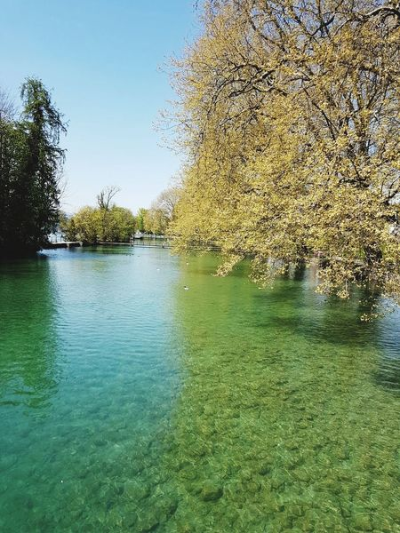 Spiez Switzerland Swiss Green Color Outdoors Outdoor Photography Lake Lake View Lakeside Lakeview Lakelife Tree Trees Tree Tree_collection  Trees And Sky Tree_collection  Tree And Sky Water Beauty In Nature Nature Beauty In Nature Nature Photography Nature_collection Nature The Great Outdoors - 2017 EyeEm Awards Live For The Story Place Of Heart Your Ticket To Europe