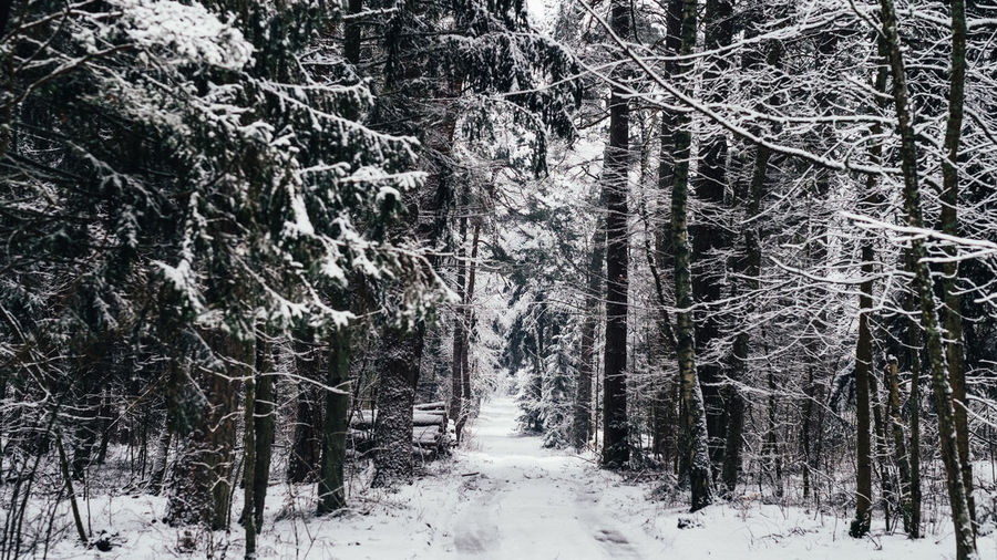 Snow covered land amidst trees in forest