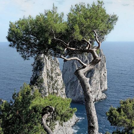 Faraglioni Capri Faraglioni Capri Ig_europe Ig_italia Ig_italy Followforfollow Likeforlike Instagramitalia Igers Instalike Instadailyphoto Ig_captures Fotoitaliane Scatto_italiano Seascape Bestmyphoto