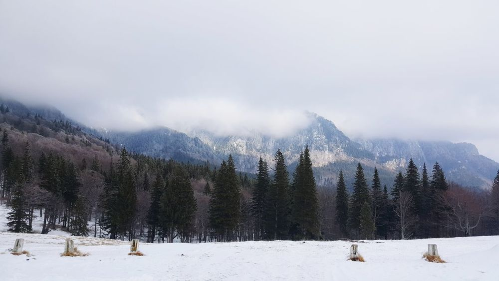Winter Snow Cold Temperature Pinaceae Pine Tree Mountain Tree Forest Cloud - Sky WoodLand No People Frozen Polar Climate Travel Environment Outdoors Snowcapped Mountain Landscape Fog Travel Destinations EyeEmNewHere Taken With Phone 👀 Perspectives On Nature