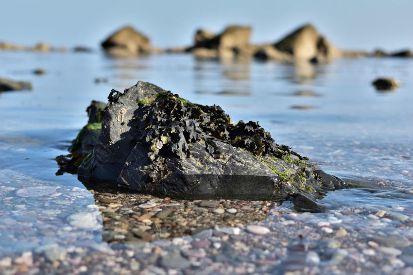 Devon UK Torbay Torquay Close-up Day Meadfoot Meadfoot Beach Nature No People Outdoors Rock Rock - Object Sea Stone Water