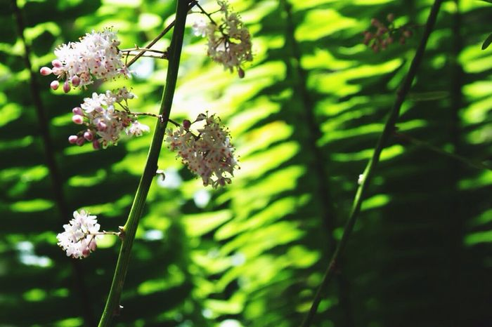 Nature Flower Growth Fragility Beauty In Nature Day Freshness Focus On Foreground Close-up