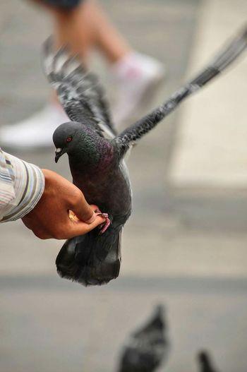 Milano Pigeon Photography Photo.Mariusz Woźniak Check This Out Taking Photos Relaxing Enjoying Life Italy Fanpage