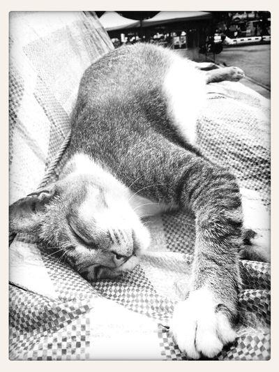 cat enjoying afternoon nap.