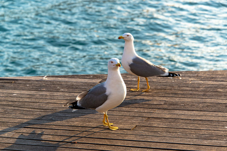 Seagull perching on a pier