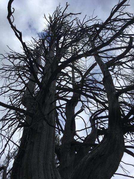 Argentina Villa La Angostura South America Bosque De Arrayanes Tree Branch Beauty In Nature Sky Bare Tree