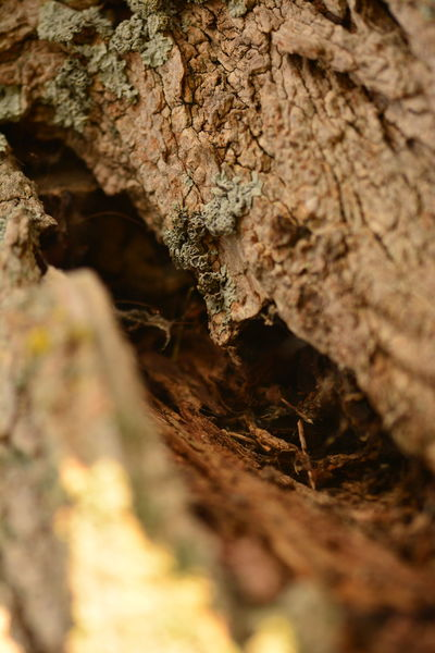 inside Tree árbol Naturephotography Macrophotography Naturaleza Tronco Selective Focus No People Nature Outdoors Day Close-up Beauty In Nature