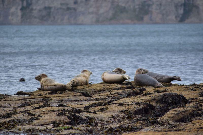 Gray seals on rocks at shore