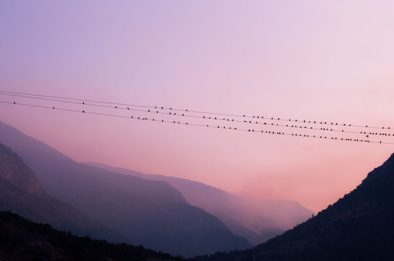 Bird S.O.S. Animal Themes Beauty In Nature Bird Birds Clear Sky Day Landscape Mountain Mountain Range Mountains Nature No People Outdoors Purple Scenics Sky Sos Sunset Tranquil Scene Tranquility