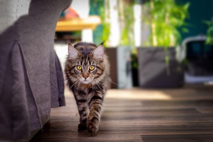 Portrait of cat on floor