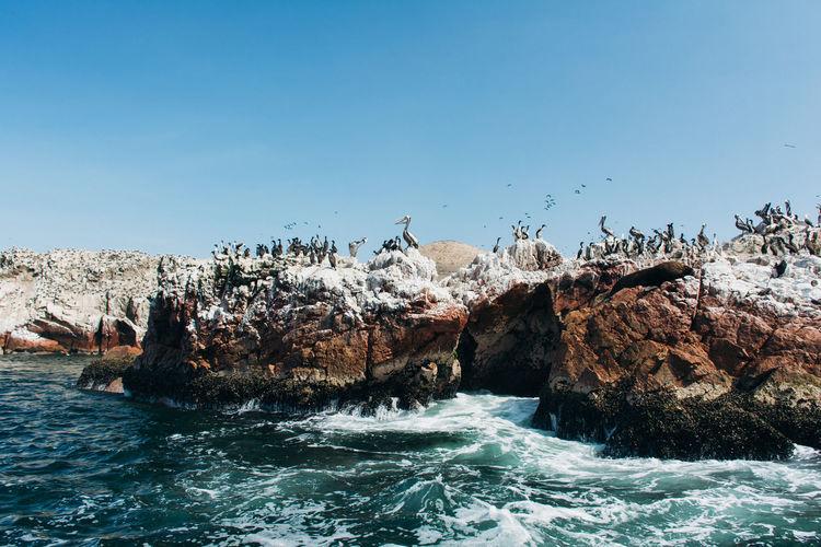 Birds perching on rock at beach against blue sky