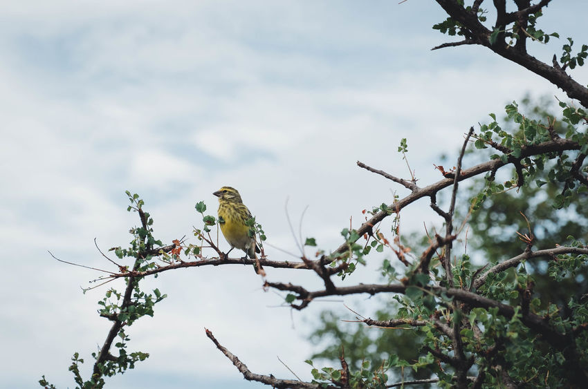 Tarangire Bird Animal Themes Animal Wildlife Animals In The Wild Bare Tree Beauty In Nature Bird Birds Tarangire Branch Branch Of A Tree Day Low Angle View Nature No People One Animal Outdoors Perching Songbird  Tarangire Tarangire National Park Tree