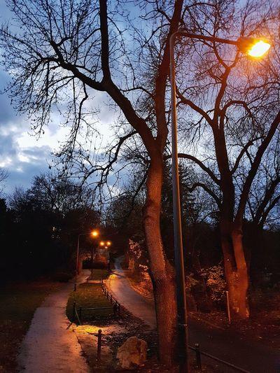 Tree Illuminated Sky Nature No People Outdoors Night Beauty In Nature Autumn🍁🍁🍁 Autumn Colors Tree Park Street Litten Street