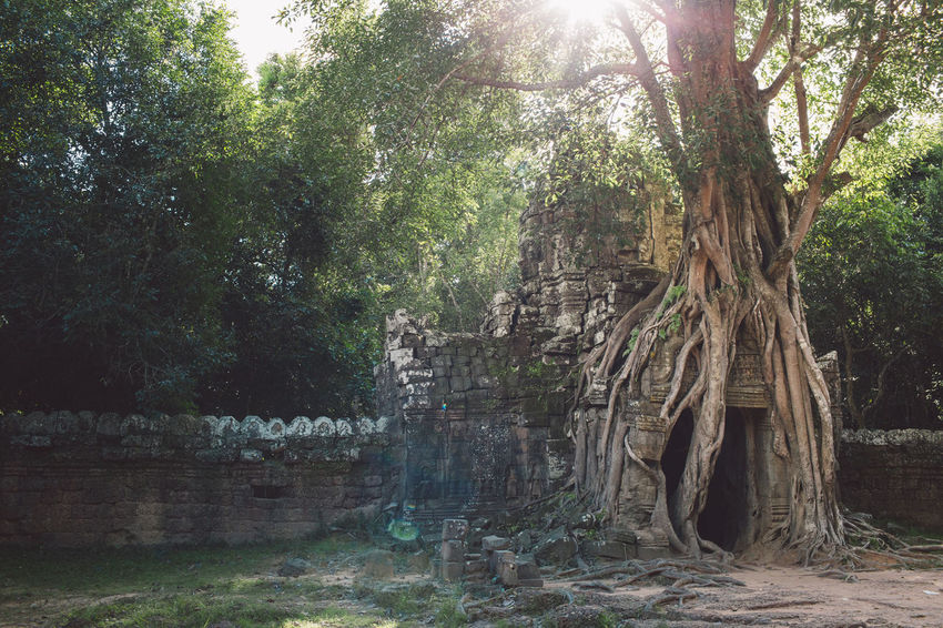 Siem Reap Cambodia Angkor Tree Plant Land Forest Nature Growth Day Tranquility Trunk Tree Trunk Sunlight Beauty In Nature No People Outdoors Scenics - Nature Architecture Water Built Structure Tranquil Scene Park