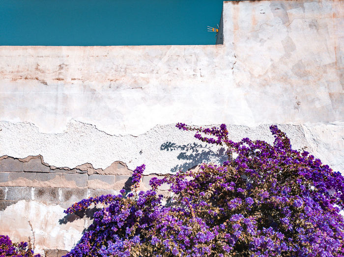 Pink flowering plant against wall