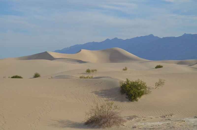 California Death Valley Death Valley National Park Desert Hot Mesquite Flat Sand Dunes Sand Dune Stovepipe Wells