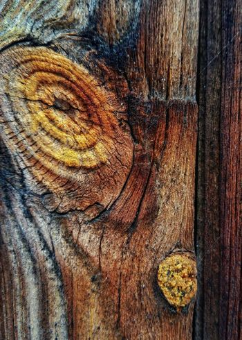 Tiger eye. Showing Imperfection Close Up Detail Wood Knot Wood Knot Lichen Decay Wood Decay Patterns In Nature Patterns In Wood Nature Wood Texture Wood Grain Texture Wood Grain Textures Textures And Surfaces Texture Weathered Wood Weathered