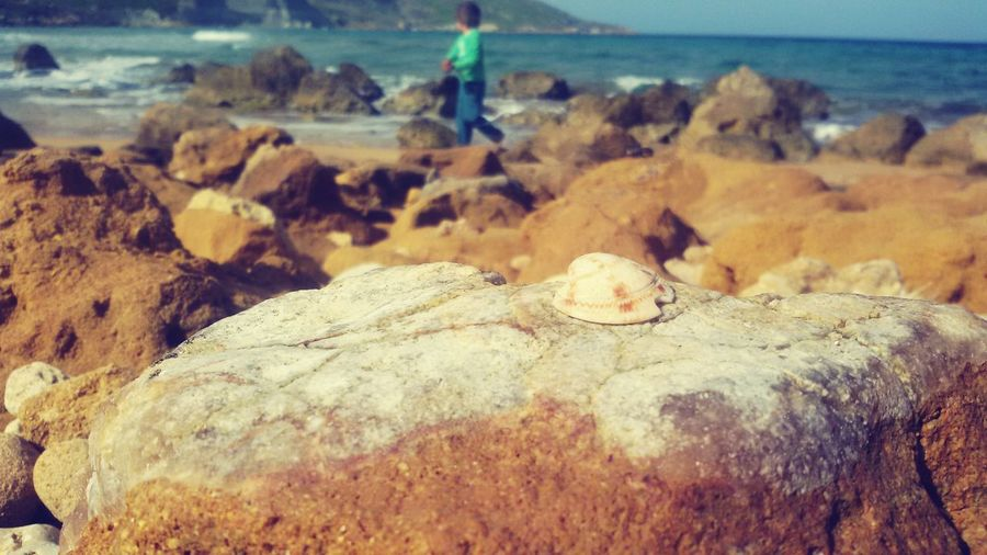 A fossil is a treasure, so are kids Ramla Bay No To Abortion Playing On The Beach Fossil Sea Shells 🐚
