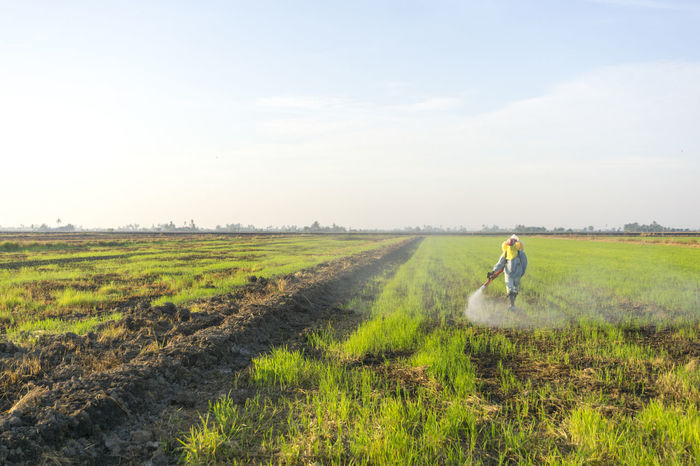 Adult Agriculture Cereal Plant Crop  Day Farm Farm Worker Farmer Field Grass Growth Landscape Men Nature Occupation One Person Outdoors Plant Plowed Field Real People Rural Scene Scenics Sky Standing Working