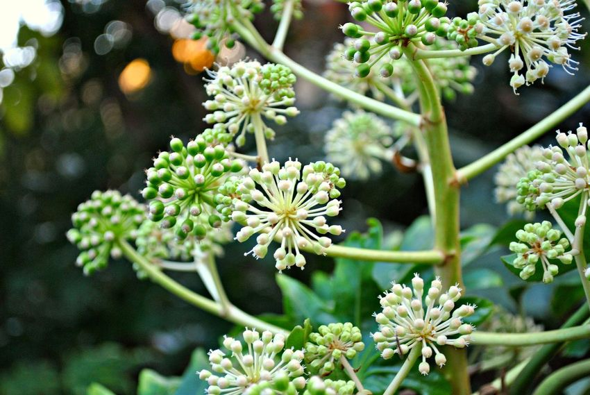 Beauty In Nature Blooming Close-up Day Flower Flower Head Focus On Foreground Fragility Freshness Green Color Growth Leaf Nature No People Outdoors Petal Plant Tree
