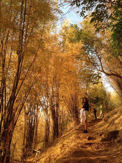 Color Palette Golden Yellow Forest Forestwalk Bamboo Forest Loei Thailand Nature Trekking Me