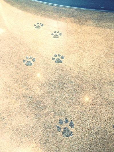 Adorable Path of #paw prints etched into the floor of the @DoveLewis lobby. So charming! #dogsrule