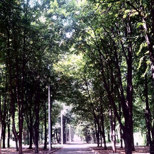 Это наверное главная Аллея в парке зеленый Гай.