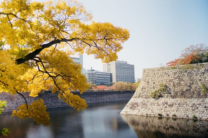OSAKA Autumn Japan Kansai Tree Yellow Hunter