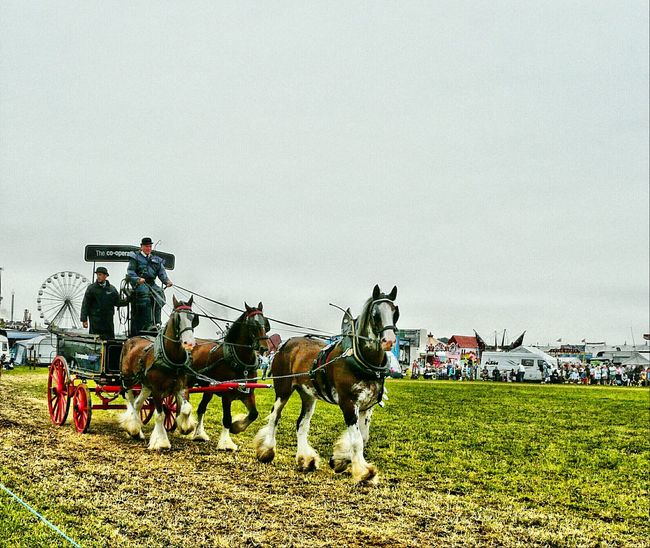Great Day Out Great Dorset Steam Fair Transportation Shire Horses Nature Heavy Haulage Beutiful Colors Animals